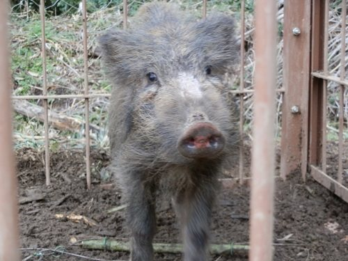 動物の柵を設置して獣害の対策をお考えの方