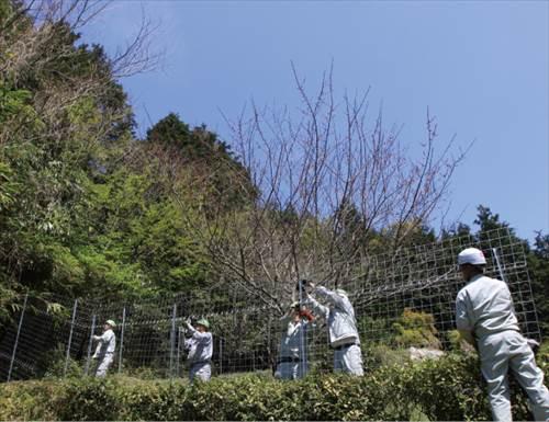 フェンスのメーカー【キャムズ】では簡単に設置できるワイヤーメッシュのオリジナルフェンスを提案