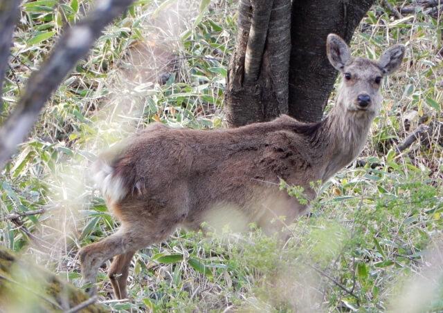 野生動物による農作物の被害を防ぐためには~「獣害」対策に必要な柵~